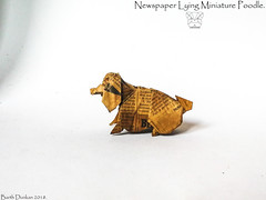 Newspaper Lying Miniature Poodle - Barth Dunkan. (Magic Fingaz) Tags: anjing barthdunkan chien chó dog gremlins hond hund köpek origami perro pies пас пес собака หมา 개 犬 狗