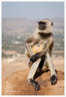 Madame Macaque prend la pose
