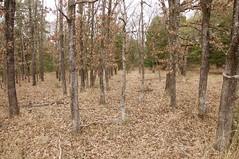 Fairfield Lake State Park (J T Williams) Tags: fairfield lake state park texas post oak