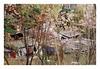 (Jordane Prestrot) Tags: jordaneprestrot film filmisnotdead analog argentique argéntico película coréedusud southkorea coreadelsur ♈ séoul seoul seúl bidonville slum chabola tree arbre árbol