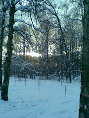 sun today (VERUSHKA4) Tags: park kuskovo nokia europe russia moscow ville hiver vue view city cityscape landscape winter february sun nature neve neige day sky light sunlight trunk blue tone branch bough perspective season track way
