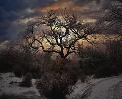 il Bosco d'Inverno (M.K.S. v i d e o • p h o t o g r a p h y) Tags: toscana tuscany toscane tramonto arezzo laterina villamonsoglio inverno winter bosco sunset neve snow