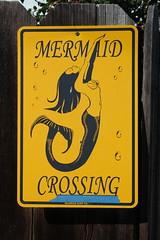 IMG_7585 (mudsharkalex) Tags: california pacificgrove pacificgroveca mermaidavenue mermaidcrossing mermaidxing mermaid sirena sign signs