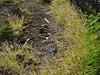 Halona Blowhole & Hanauma Bay Nature Preserve (57) (pensivelaw1) Tags: hawaii oahu halonablowhole hanaumabaynaturepreserve