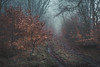 Follow me (chrismarr82) Tags: nikon d750 renfrewshire scotland fog tree woods forest