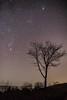 Starry starry night (jac.photography49) Tags: stars nightsky night orion pleiades m45 tree seven sisters nebula constellation milkyway