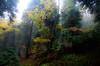 urkiola laiñoa 1 (juan luis olaeta) Tags: paisajes landscape fog nieblas laiñoa nature naturaleza forest tree basoa bosque canon photoshop lightroom otoño autumn udazkena
