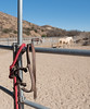 At the corral (victoriabrush) Tags: horseschampcreamcoloredponyanimal halter corral outwest