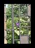 Duke Gardens July 2015 9.03.04 PM (LaPajamas) Tags: nc flora dukegardens gardens