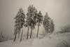 Feldberg (PetschoX5) Tags: petscho freedomstreaming canon 700d fotografie photography deutschland germany weiss white whitesnow schnee snow forest wald wälder nebel fog