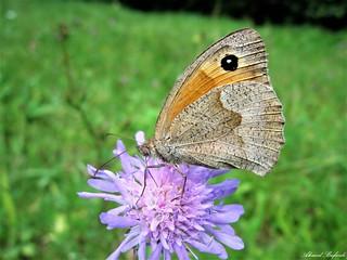 Butterfly 1566