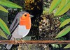 Smiling Birdy (Megan Coyle) Tags: smiling smile joy orange green wildlife birdy bird orangebird birdart birdcollage paperart papercollage collageart collage art cutandpaste paintingwithpaper megancoyle coylecollage magazinecollage