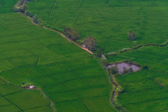Peace (Emu Alim) Tags: thailand chiangmai sony a9 green field aerial line landscape pointofview
