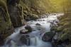 Begbie Falls (andrewpmorse) Tags: begbiefalls revelstoke river landscape water waterfall rapids rapid cascade bc britishcolumbia landscapes canon 5dmarkiv canon5dmarkiv 2470f28lii rocks trees art canada longexposure flowingwater