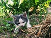 #cat #babycat #baby #green #park (Ingrid T.) Tags: cat babycat baby green park