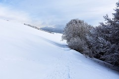 Bianco (lauratintori) Tags: detail details whitesky graysky sky fog cloudy cloud clouds light natural nature treesfullofsnow trees tree trekking pathway 2018 winter ice snow white colour panoramic panorama view pointofview photography photo picture pic ph lauratintoriph
