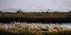 la sansouire (rey perezoso) Tags: 2017 camargue france eu europa landscapes provence rhône parcnaturelrégionaldecamargue nature naturallight daylight day etang salinas gras winter hiver aiguesmortes saline