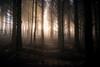 Conrhenny Plantation (cabmanstu) Tags: isleofman conrhenny plantation woods mist fog trees nature