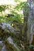 Mt Ranier: Grove of Ancients (jdpowell7) Tags: mt ranier washington groveofancients grove ancients