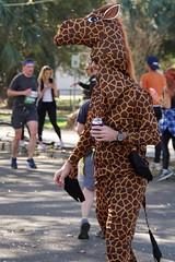 32 Rock 'n' Roll Marathon (Omunene) Tags: humanarocknrollmarathonneworleans2018 brooks race marathon 42195k 26219m esplanadeavenue faubourgstjohn neworleans runners