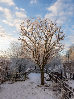 Winter im heimischen Garten