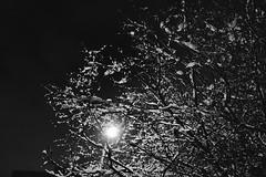 winter weight (KevinIrvineChi) Tags: light snow branches night streetlight albanypark chicago illinois cook county sony dscrx100 monochrome monochromemonday monday up downlighting sky dark blackwhite blackandwhite noir blanc blanca blanco tree bnw bw winter 2018 february et boingboing ice icy snowy snowcovered