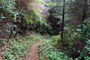 Part of a very steep drop down to Berry Creek (rozoneill) Tags: cape mountain berry creek siuslaw national forest hiking oregon florence princess tasha scurvy ridge trail nelson coastal
