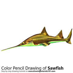 Sawfish with Color Pencils [Time Lapse] (drawingtutorials101.com) Tags: sawfish fish fishes animal animals sketch sketches draw drawing drawings color colors coloring pencil how drarw timelapse video speed