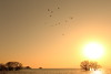 Lake Biwa (Teruhide Tomori) Tags: 滋賀県 琵琶湖 湖北 長浜市 日本 風景 日没 自然 nature landscape japan japon lakebiwa water sunset sky ハクチョウ 冬 winter bird swan sun tree