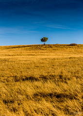 Lone Tree on the Big Prairie (Kent Copeland) Tags: fallcolors prairie tree boulder colorado unitedstates
