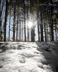 """""""The Earth is Art, the Photographer is only a Witness""""  Yann Arthus-Betrand (Kevin Adams.1) Tags: sunshine sun sunburst sunflare snow winter michigan kalamazoo oshtemo woods wilderness forest trees timber landscape photography nature beauty beautiful amazing outdoors shadows shade hardlight light silhouette"""