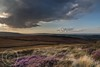 Sunset and Rain Aug 31st 2017 006 (Mark Schofield @ JB Schofield) Tags: huddersfield holmemoss holmfirth holme westnab valley moors moorland heather cloud rain sunset evening cooks study
