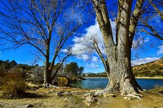 Trees in Ruidera