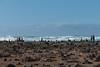 beach figures (zoomseb) Tags: steine steinmännchen wegweiser strand übereinander stones fuerteventura cotillo cairn