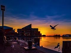 Baltimore Sunrise (still_shotz) Tags: travel maryland silhouette birds seagulls sunrise innerharbor baltimore