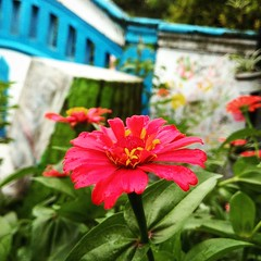 ꦏꦼꦩ꧀ꦨꦁꦔꦤꦸ Kembang Embuh.. #ꦏꦼꦩ꧀ꦧꦁ #ꦄꦼꦩ꧀ꦧꦸꦃ #ꦱꦸꦏꦼꦠ꧀ #ꦗꦮ #ꦫꦝꦶꦠꦺ #ꦫꦝꦶꦠꦺꦮꦶꦱꦔ꧀ꦒꦼꦤꦶ #Kembang #Bunga #Flora #Nature #Embuh #Flower #InstaFlora #InstaNature #r4dit3 #Ig_Flora #Ig_Nature #XiaomiPhotography #XiaomiRedmiNote4 #RedmiNote4 #ReNo4 #Xiaomi #AndroidPhoto (wisaN6geni) Tags: nature flora xiaomiredminote4 instaflora r4dit3 embuh xiaomi bunga ꦏꦼꦩ꧀ꦧꦁ androidphotography kembang likeforlike reno4 redminote4 ꦫꦝꦶꦠꦺꦮꦶꦱꦔ꧀ꦒꦼꦤꦶ ꦱꦸꦏꦼꦠ꧀ ꦗꦮ like4like like4follow igflora instanature ngopinyambirokokan ignature likeforfollow ꦫꦝꦶꦠꦺ ꦄꦼꦩ꧀ꦧꦸꦃ flower xiaomiphotography