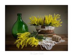 Mimosas para Blanca..... (.... belargcastel ....) Tags: mimosas still stilllife bodegón texturas cristal damajuana amarillo verde belargcastel spain españa