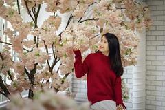 Anna (Hai PT) Tags: vietnam lamdong dalat storylove sonyalpha a7m2 fe55 flowers girl portrait indoor beauty young