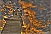 Simbolo di forza (bruto68) Tags: bruto68 nikon nikond300s nikon18200 nikond200 roma rome romansky 2018 citta colore cielo city color archeologia architettura acqua ponte photomatix hdr hrd sky samyang