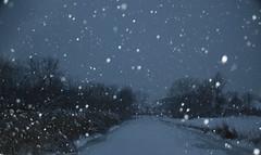 stars or snow? (Sofeha) Tags: snow canada snowstorm winterstorm storm winter snowing flash trees path snowflake snowfalling