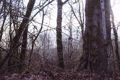 February light (Obsidianphotog) Tags: outdoors hiking park mintobrownisland winter 2018 salem oregon trees light usa sony
