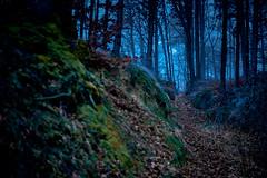 Exploration (Meinrad Périsset) Tags: forêt sombre chemin sentier switzerland suisse schweiz swizzera nikond850 d850 captureone11pro