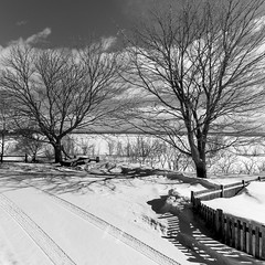 ile 2018-30 (Tasmanian58) Tags: maple trees orleans island snow landscape light batis18 batis zeiss sony a7ii blackandwhite quebec canada
