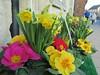 Flowers and Plants Victoria Hall Oakham Rutland (@oakhamuk) Tags: flowersandplants victoriahall oakham rutland