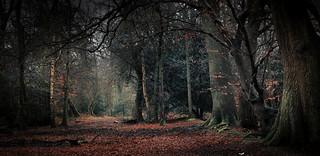 Wet winter woods