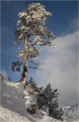 Larra-Belagua011 (Fermin Ezcurdia) Tags: larra belagua navarra pirineo nieve pyrenees esquinordico arlasarette anie