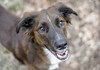 Bruno (piano62) Tags: dogs dogrescue mansbestfriend smiles happy handsome fun play hopes dreams sweetheart sonya7rii nikon50mm18