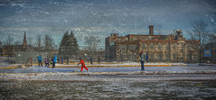 Game of Shinny at  Sorauren Avenue Park Toronto (JACK TOME) Tags: toronto winter hockey outdoor ice