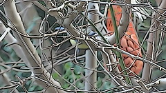 Birds seen from a dirty window\ (Enrico Luigi Delponte) Tags: uccelli birds finestrasporca dirtywindow sony