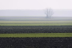 0706 Slavonian Sea (Hrvoje Simich - gaZZda) Tags: landscape outdoors noperson morning misty mist fog tree forest green slavonia croatia europe nikon nikond750 sigma150500563 gazzda hrvojesimich